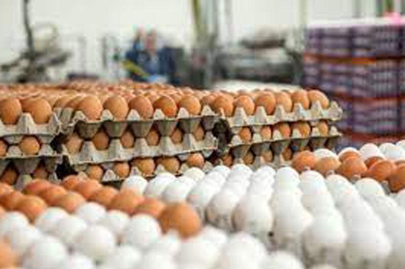 خواص سفیده تخم مرغ برای دیابت