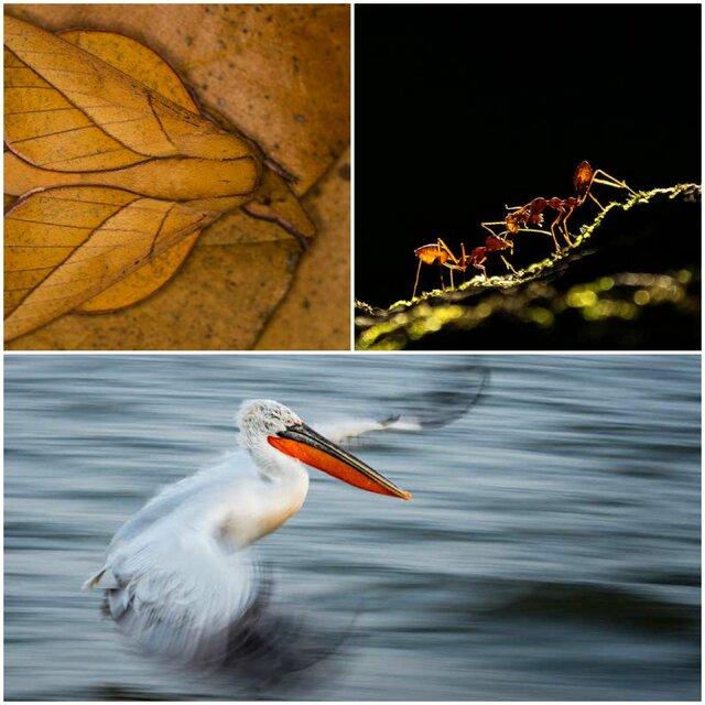 زیباترین تصاویر از جهان طبیعی در یک مسابقه عکاسی
