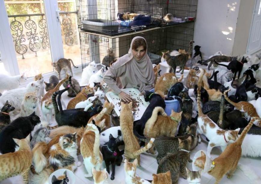 زنی که ۵۰۰ گربه و سگ در خانه دارد!/ عکس