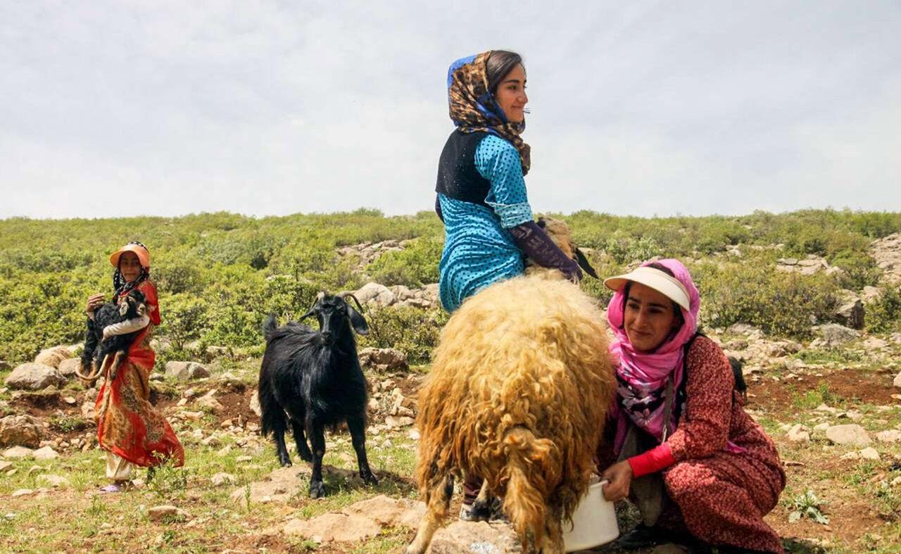 ارائه وسایل پیشگیری از بارداری در مناطق عشایری ممنوع شد
