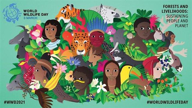 جنگلها در تلاقی بحرانهای کره زمین؛ از تغییرات آب و هوایی تا کرونا